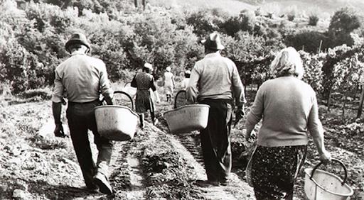 contadini-toscana-vigneti-amarcord